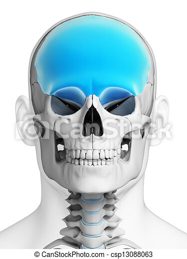 Highlighted Frontal Bone 3d Rendered Illustration Stock