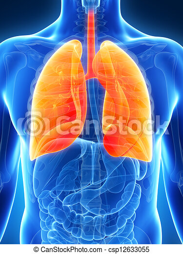 Highlighted male lung - csp12633055