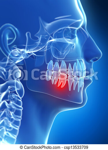 Highlighted tooth - csp13533709
