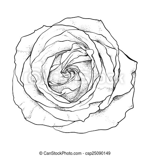 Highly detailed hand drawn rose drawing Search Clip Art