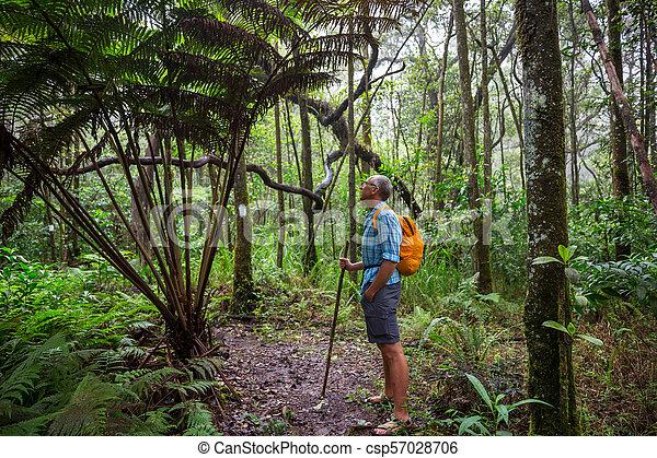 Hike in jungle - csp57028706