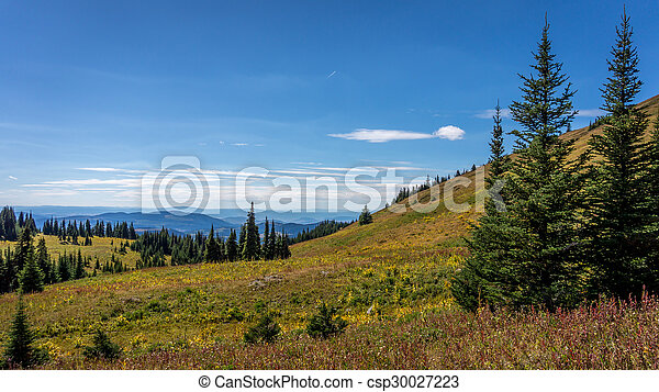 Hiking through alpine meadows - csp30027223