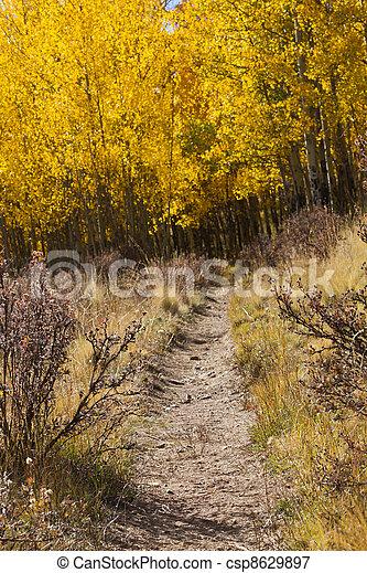 Hiking Trail Through Golden Aspen Forest In Fall - csp8629897