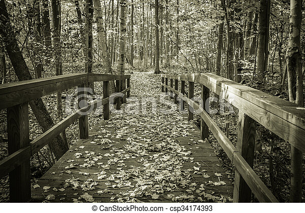 Hiking Trail Through The Forest - csp34174393