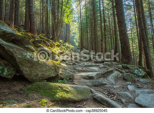 Hiking trails through giant redwoods - csp38925045