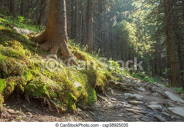 Hiking trails through giant redwoods - csp38925035