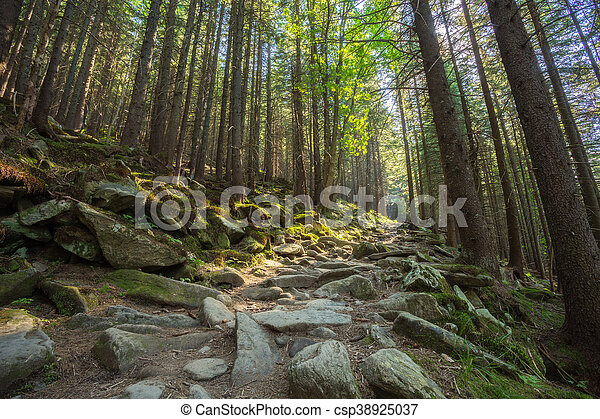 Hiking trails through giant redwoods - csp38925037