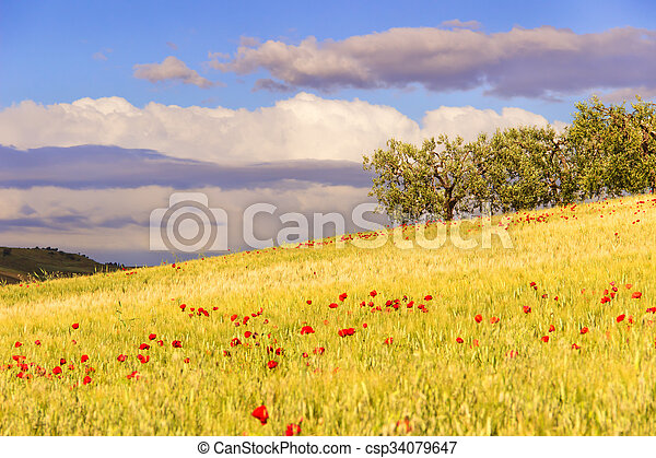 Hilly landscape with cornfields. - csp34079647