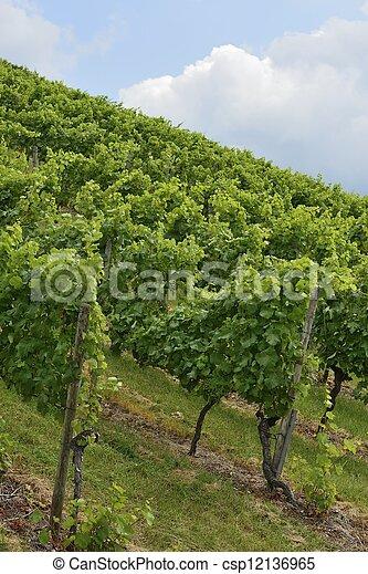 hilly vineyard #1, Stuttgart - csp12136965