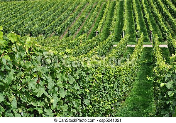 hilly vineyard #7, baden - csp5241021