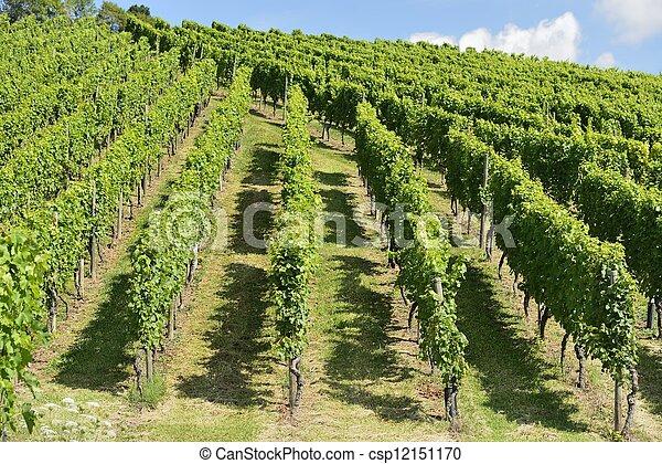 hilly vineyard #7, Stuttgart - csp12151170