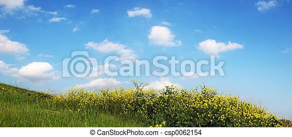 himmel, græs, -, vid - csp0062154