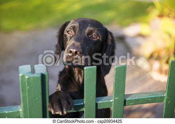 hinten hund zaun reizend kleingarten zaun hund stockfoto bilder und foto clipart. Black Bedroom Furniture Sets. Home Design Ideas