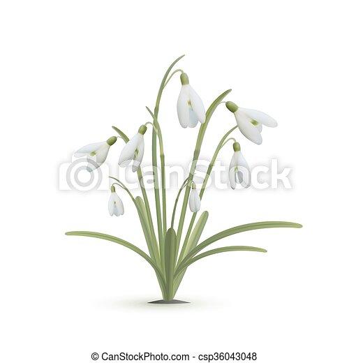 Hintergrund Weisse Blumen Schneeglöckchen Illustration