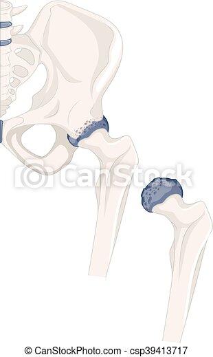 Stock Illustration of Human hip bone, artwork u67328756 - Search ...