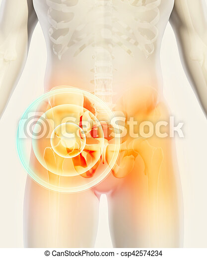 Hip painful skeleton x-ray, 3D illustration. - csp42574234