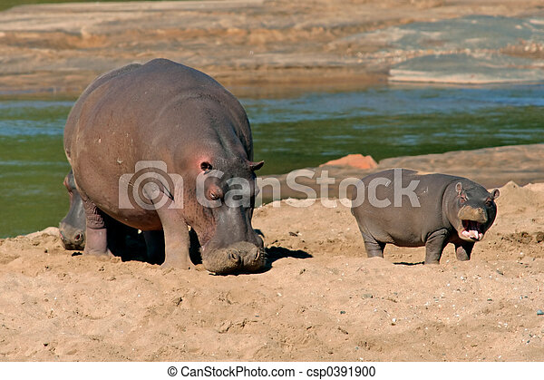 hipopótamo - csp0391900