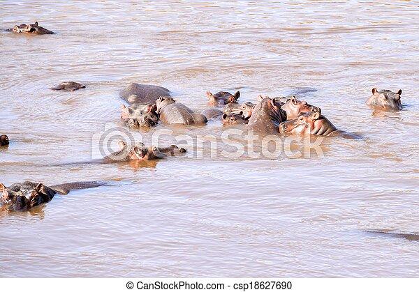 hippo - csp18627690