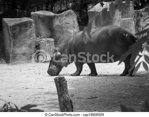 Hippo - csp19908309