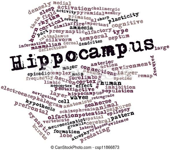 Hippocampus - csp11866873