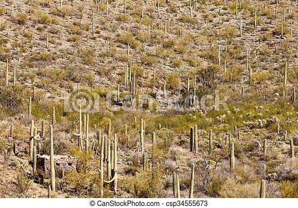 Historic stone cabin in Saguaro NP Tucson AZ US - csp34555673