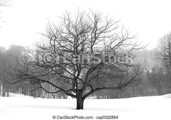hiver arbre, pomme - csp0322864