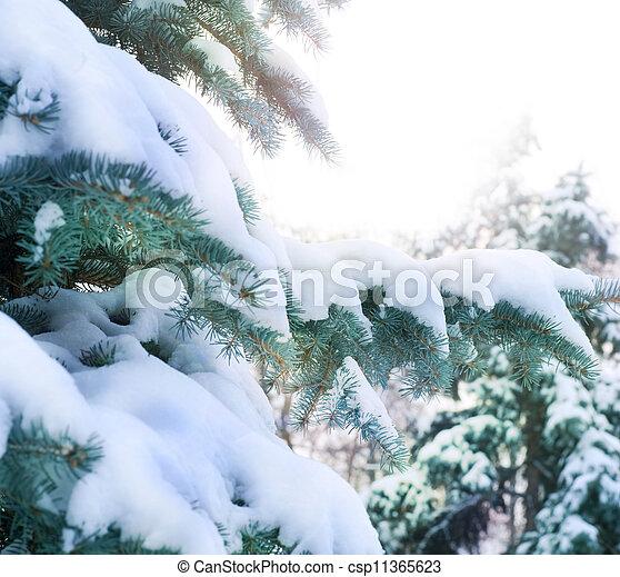 hiver, fond - csp11365623