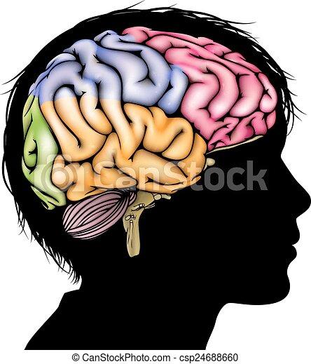 hjärna, begrepp, ungt barn - csp24688660