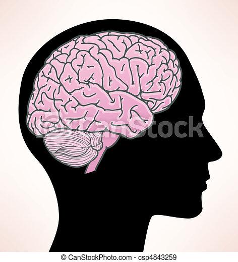 hjärna, illustration, mänsklig - csp4843259