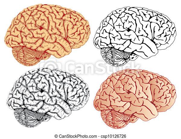 hjärna - csp10126726