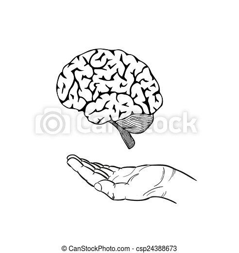 hjärna, människa lämna - csp24388673