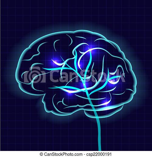hjärna, mänsklig - csp22000191