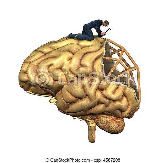 hjerne, genopbygning - csp14567208