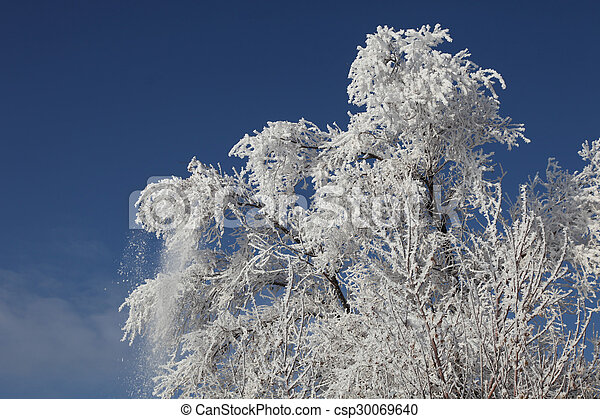 Hoar Frost Covered Tree - csp30069640