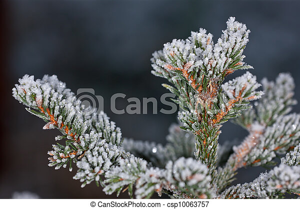 hoarfrost on branches - csp10063757