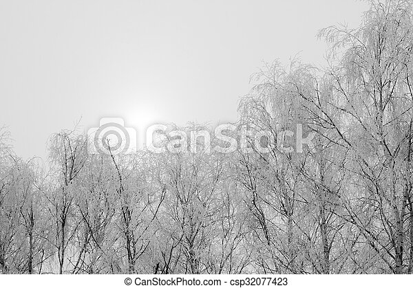 Hoarfrost on the trees - csp32077423