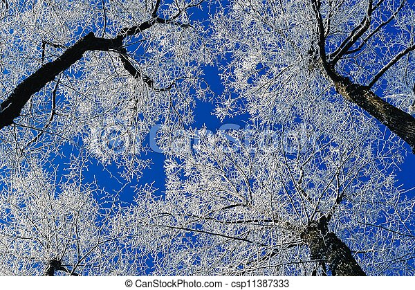 Hoarfrost on the trees - csp11387333