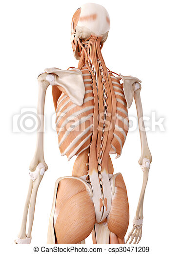 hofte muskler