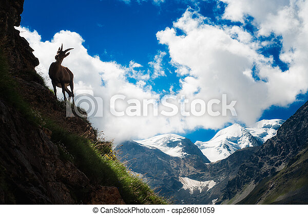 hoge hoogte, steenbok - csp26601059