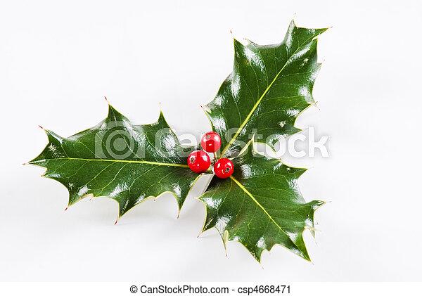 Hoja Holly con bayas rojas - csp4668471