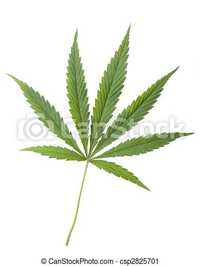 hoja, aislado, marijuana), fondo., verde, (cannabis, blanco, cáñamo - csp2825701