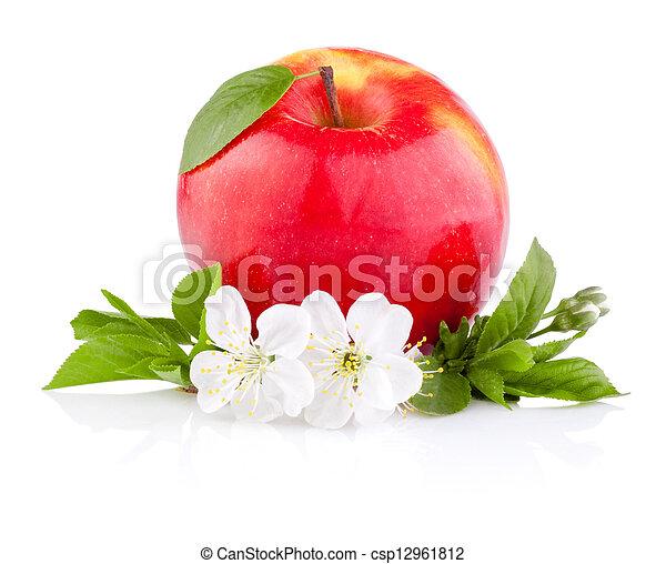 Manzanas rojas con hojas y flores aisladas en un fondo blanco - csp12961812