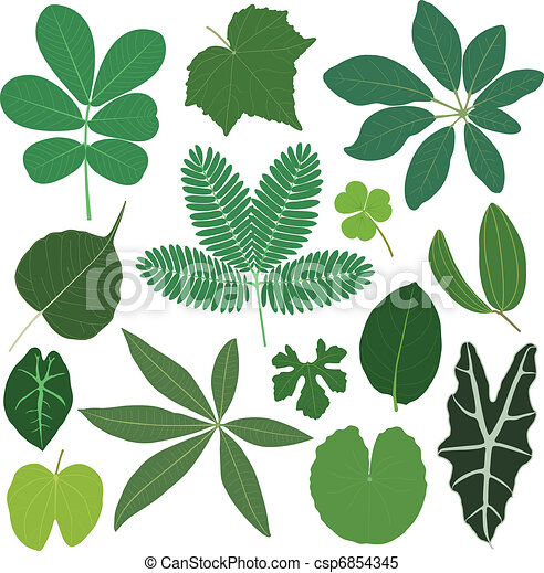 Hojas de hojas tropicales - csp6854345