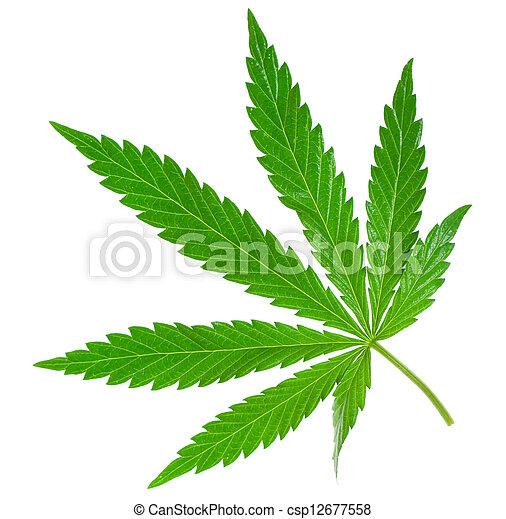 hoja, marijuana - csp12677558