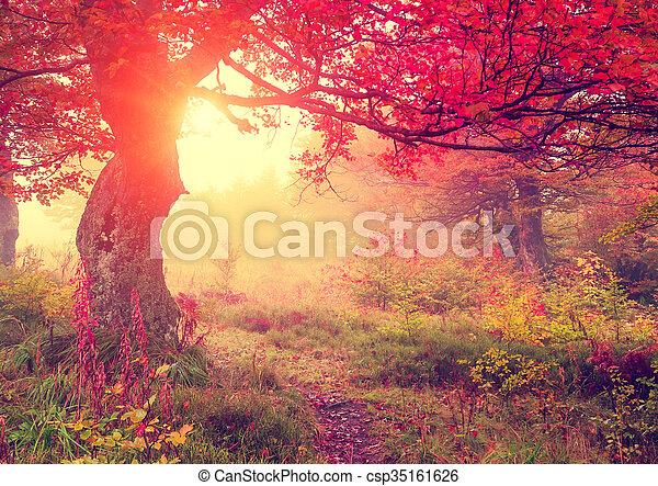 Hojas de otoño en el bosque - csp35161626