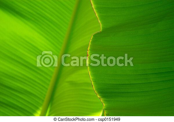 Hoja de palmera - csp0151949