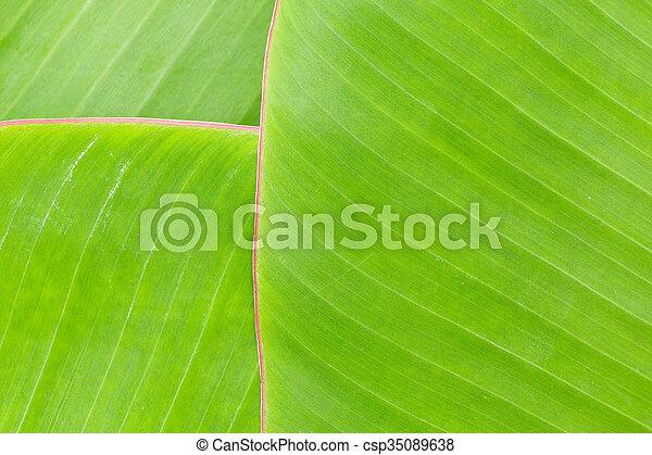 Hoja de plátano - csp35089638