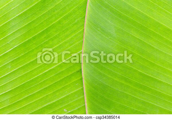Hoja de plátano - csp34385014