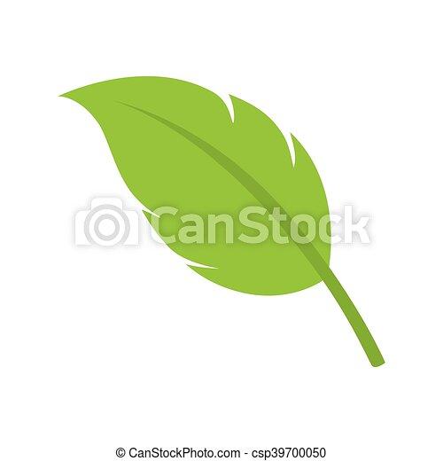 Hojas de planta natural - csp39700050