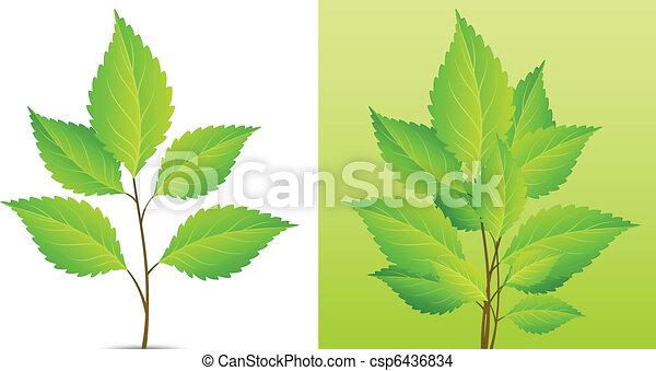 Planta con hoja verde - csp6436834